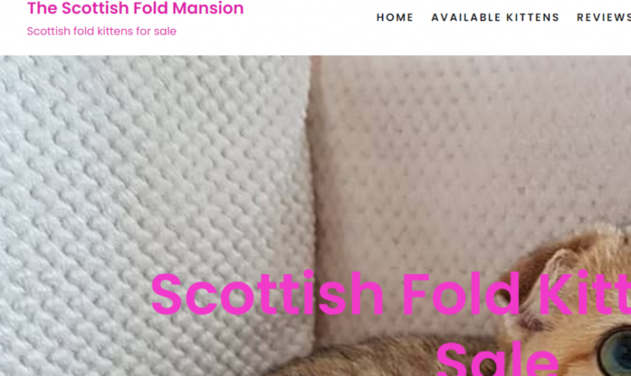The Scottish Fold Mansion Review: Scam Scottish Fold Kittens Sales!